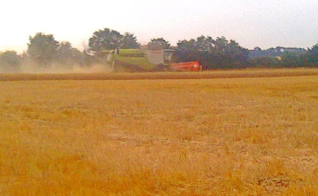 Combines surge into oilseed rape